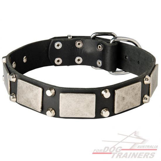 Designer Leather Dog Collar With Vintage Nickel Plates and Pyramids
