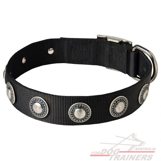 Fashionable Nylon Dog Collar with Silvery Conchos