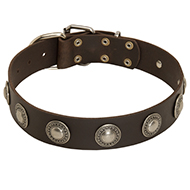Wide Leather Collar with Silver Conchos
