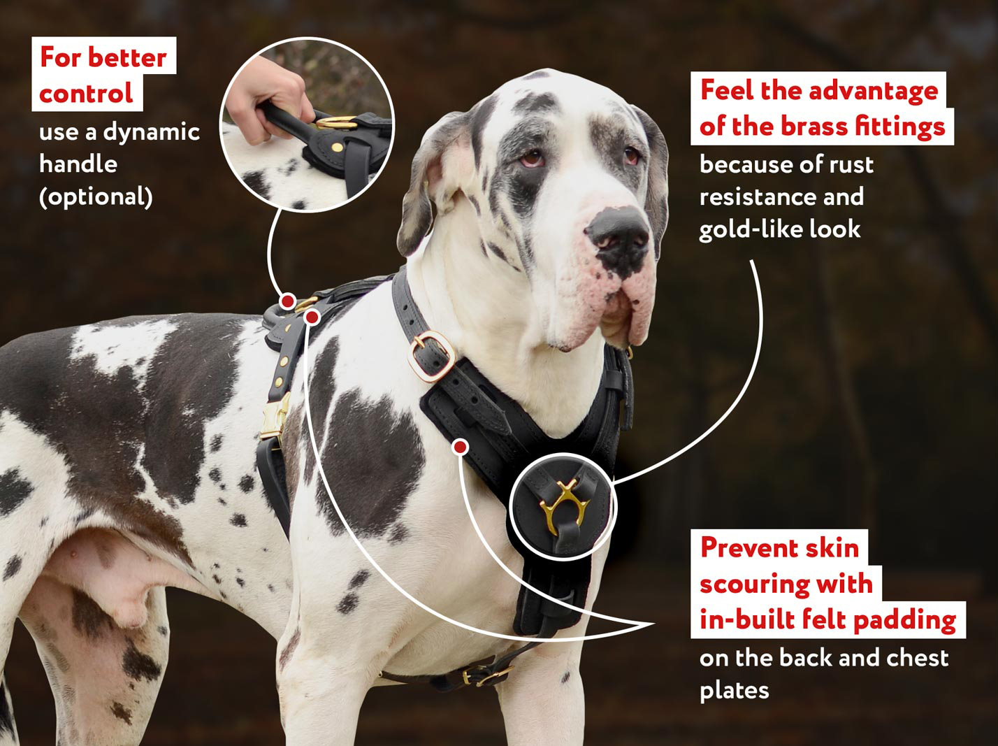 Exclusive Adjustable Padded Leather Dog Harness