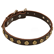 Super Gorgeous Leather Dog Collar