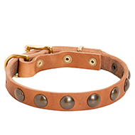 Studded Leather Dog Collar for Walking
