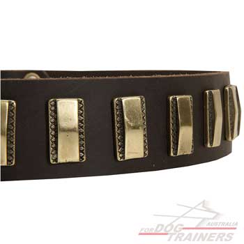 Dog collar with brass plates adornment