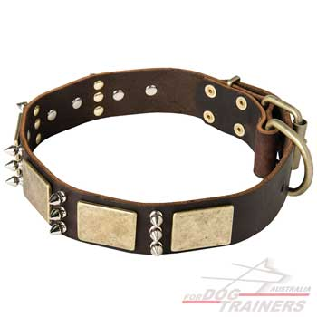 Designer dog collar with brass plates and hardware