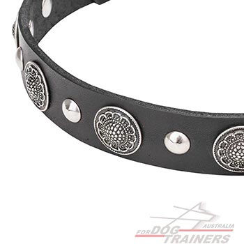 Shiny Half-Ball Studs and Large Conchos on Leather Canine Collar
