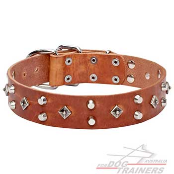 Nickel plated decor on dog leather tan collar