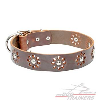 Brown leather collar for dog daily walking