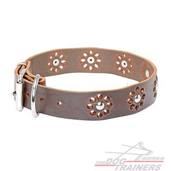 Fashionable brown dog leather collar with nickel plated hardware