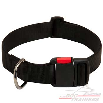 Durable Classy Nylon Collar with Easy Quick Release Buckle for Walking
