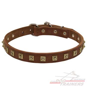 Luxurious leather collar with brass studs