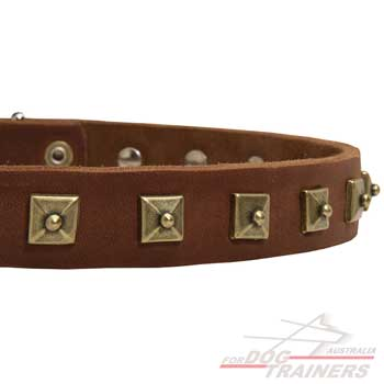 Fashionable leather dog collar