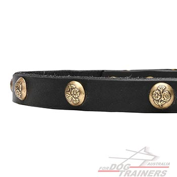 Leather dog collar with brass decorations