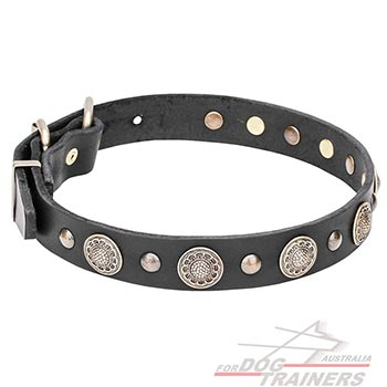 Natural Leather Dog Collar Decorated with Brass Round Studs