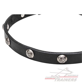Studs with Engraved Leaves on Walking Leather Canine Collar
