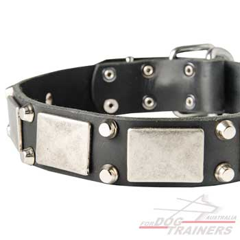Fashionable dog collar with antique decoration