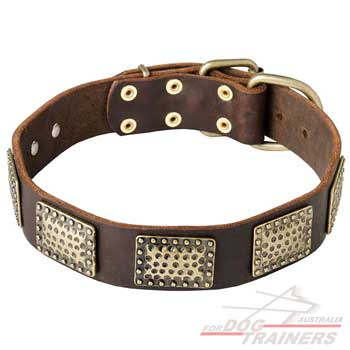Leather collar for safe dog walking