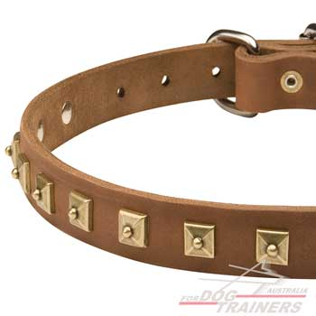 Brown Leather Walking Canine Collar with Dotted Studs