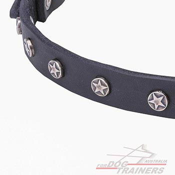 Thin dog collar with plates