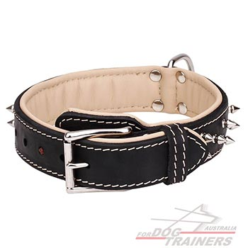 Nappa Padded Leather Dog Collar with Nickel Plated Spikes