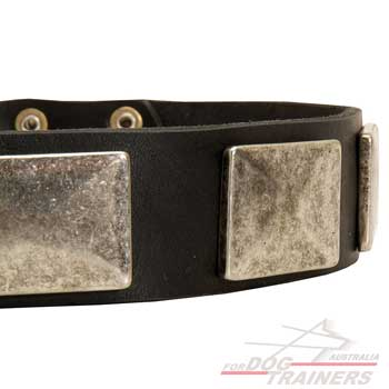 Nickel plates on leather dog collar