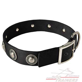 Nylon dog collar with beautiful decoration