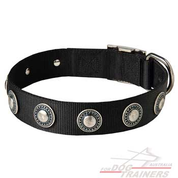 Nylon Dog Collar with Conchos