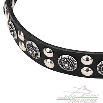 Beautiful leather dog collar with circles and studs