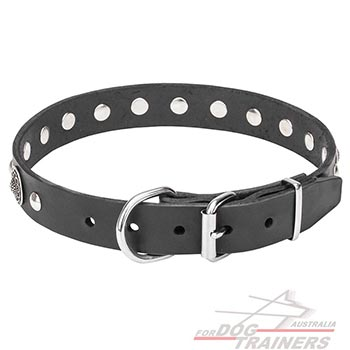 Dog Collar with Chrome Plated Buckle and D-Ring