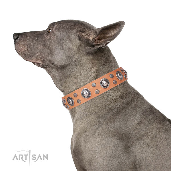 Everyday use embellished dog collar of top notch leather