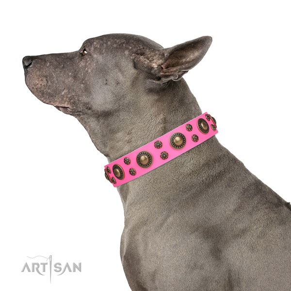 Comfortable wearing adorned dog collar of strong material