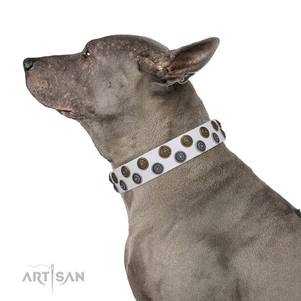 Everyday walking studded dog collar of high quality material