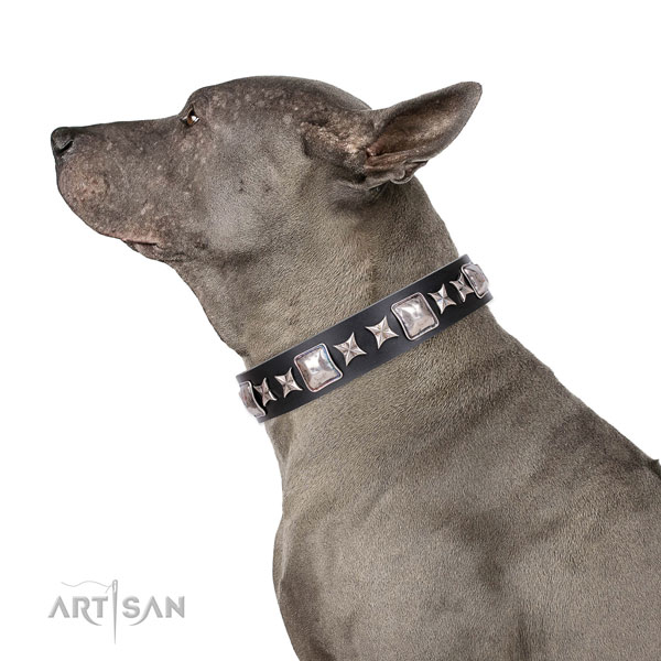 Fancy walking studded dog collar of top quality material