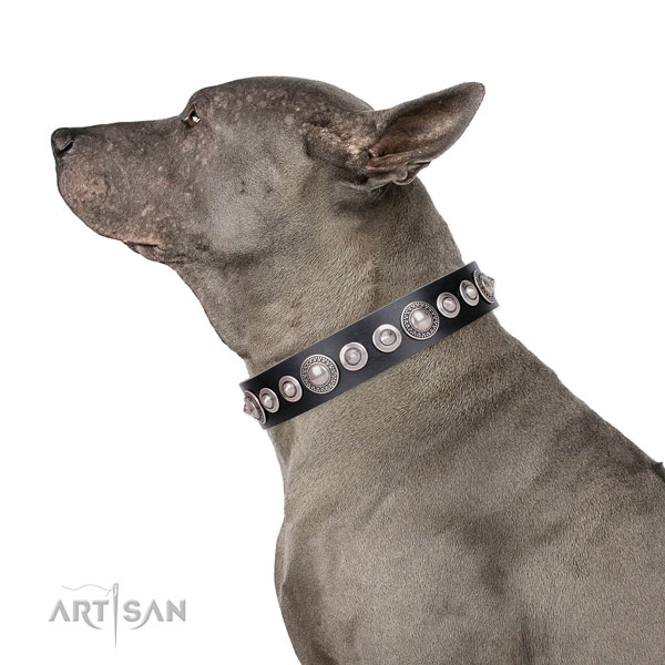 Designer studded leather dog collar for daily walking