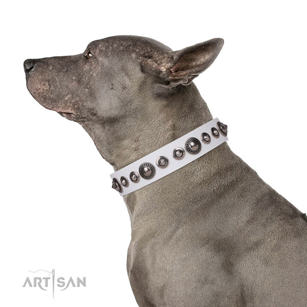 Amazing adorned leather dog collar for fancy walking