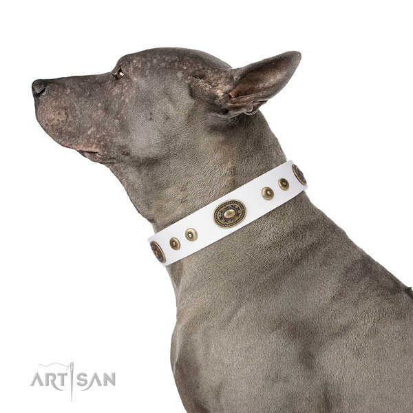 Unique decorated leather dog collar for walking