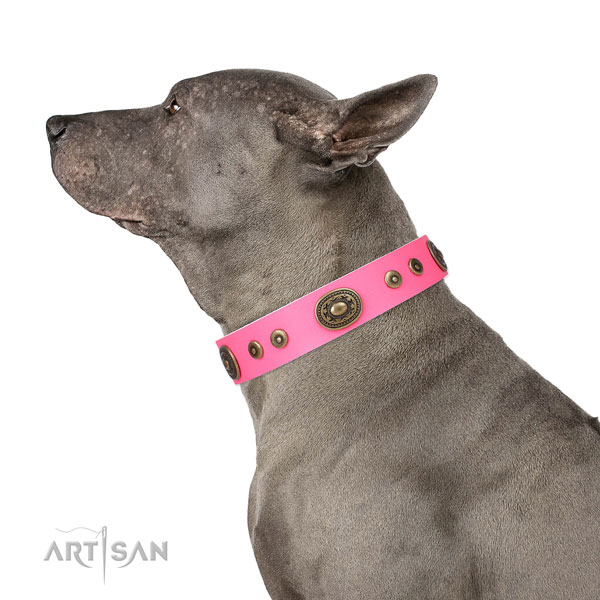 Designer embellished leather dog collar for fancy walking