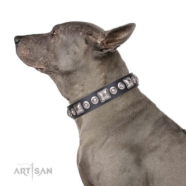 Exquisite decorated leather dog collar for daily use
