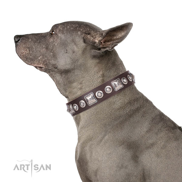 Inimitable decorated genuine leather dog collar for easy wearing