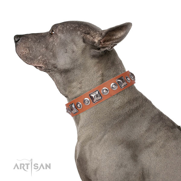 Impressive embellished leather dog collar for comfortable wearing