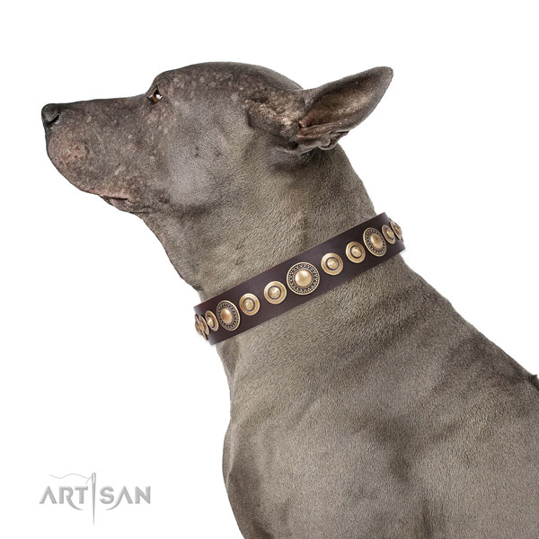 Remarkable decorated genuine leather dog collar