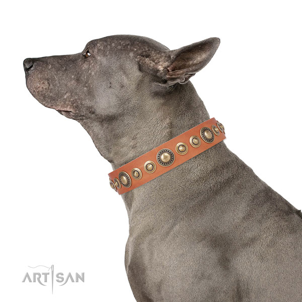 Rust-proof buckle and D-ring on leather dog collar for walking