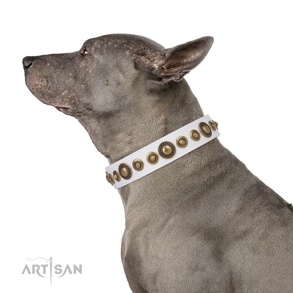 Corrosion resistant buckle and D-ring on full grain leather dog collar for everyday use