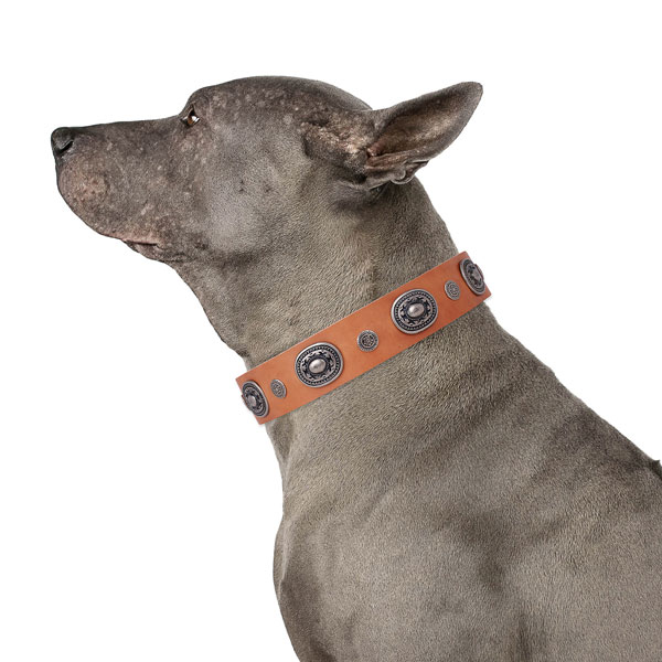 Full grain leather dog collar with durable buckle and D-ring for daily use