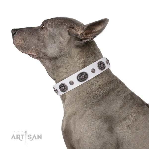 Natural leather dog collar with rust-proof buckle and D-ring for daily use