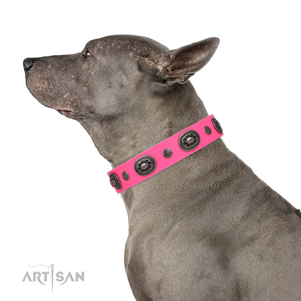 Leather dog collar with rust resistant buckle and D-ring for easy wearing