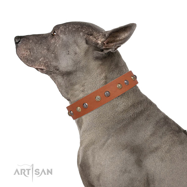 Full grain leather dog collar with reliable buckle and D-ring for handy use