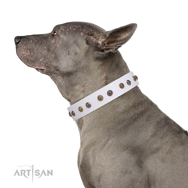 Comfortable wearing decorated dog collar made of top rate leather