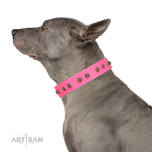Comfortable wearing studded dog collar made of top rate natural leather