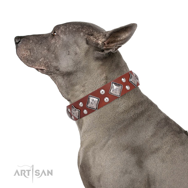 Handy use adorned dog collar made of durable genuine leather