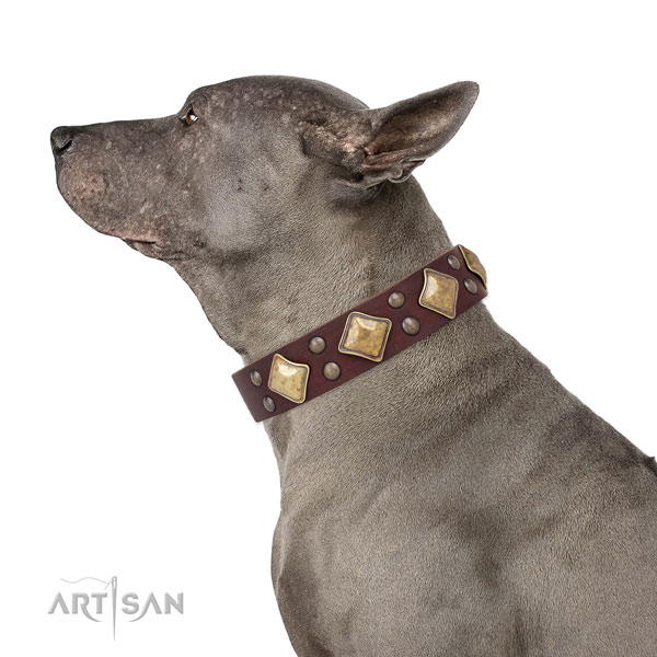 Comfy wearing studded dog collar made of reliable leather